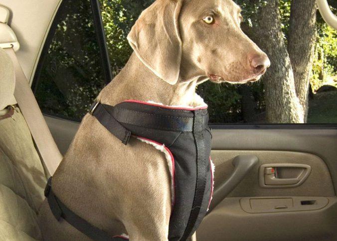 Sem classificação - Como transportar animais domésticos - Recorra Aqui Blog