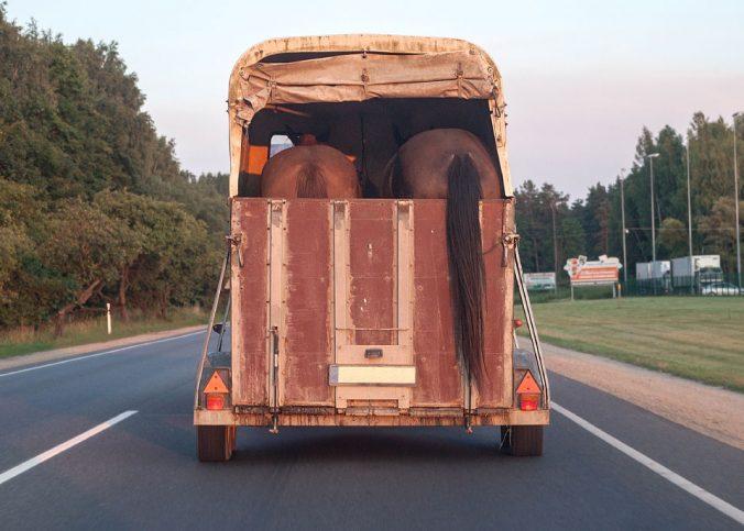 Sem classificação - Transporte de Equinos em Rodovias - Recorra Aqui - Multas e CNH - Sem classificação