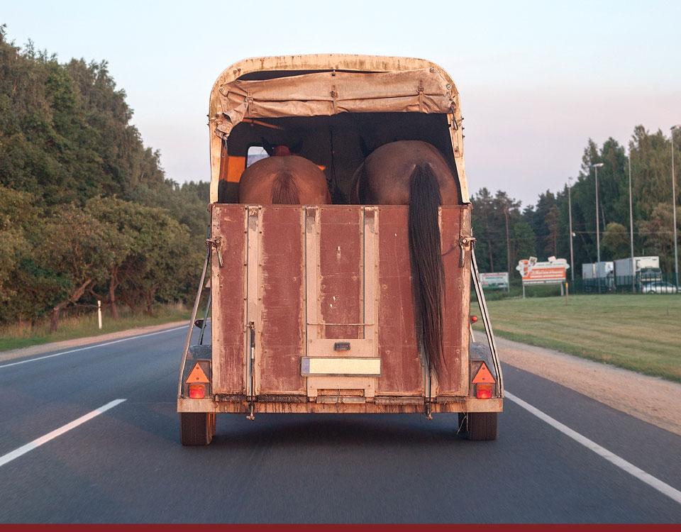 Sem classificação - Transporte de Equinos em Rodovias - Recorra Aqui Blog